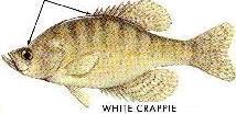 Common nj fishes for Nj freshwater fishing